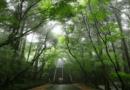 四國遍路全記錄【超狂下山路,完美詮釋什麼叫斬荊披棘】第 82 番 ~第 84 番(28 天之 27)
