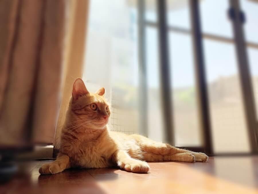 貓營養補給 毛孩市集